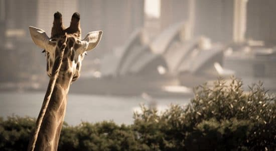 Sydney School Excursion | School Travel Agent